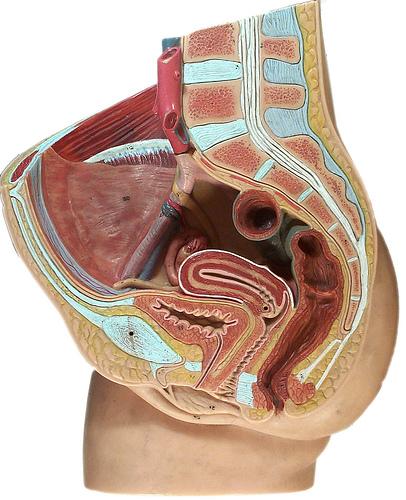 O atraso menstrual pode acontecer pela abstinência da pílula anticoncepcional